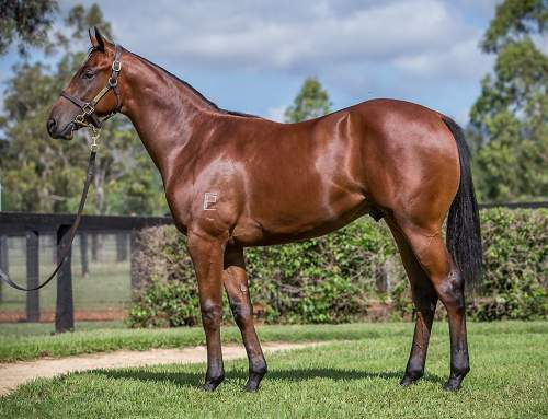 Lot 407 – Exceed and Excel x Troubeaut – Colt