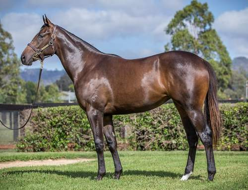 Lot 448 – I Am Invincible x Zimaretto – Filly