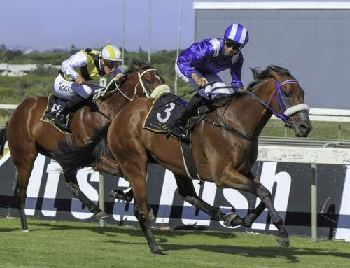 Yarraman Bred G1 Success South Africa