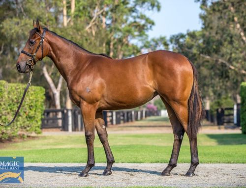 Exciting Japanese Winner for I Am Invincible