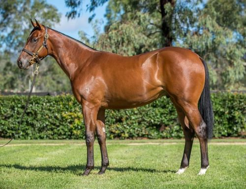 Lot 285 – Muhaarar x Ektifaa – Colt