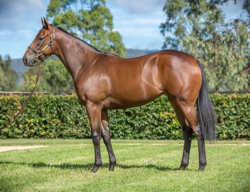Lot 292 – Snitzel x Elzeeza – Filly