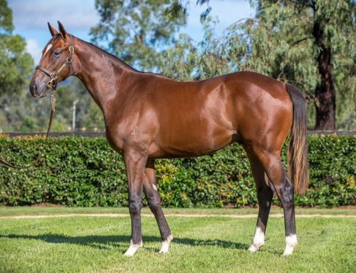 Lot 454 – Written Tycoon x Noondie – Colt