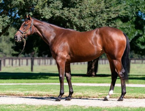 $1.25milion I Am Invincible Filly Sets New Benchmark