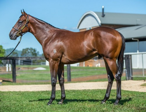 Lot 182 – Astern x Sansadee – Colt