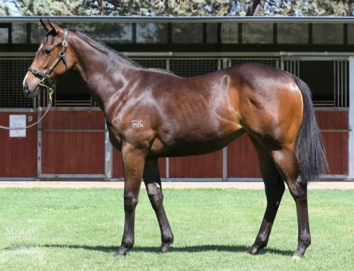 200 Winners for I Am Invincible