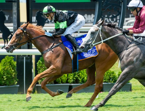 Yarraman Sold MM Contender Gotta Kiss Wins for Proven