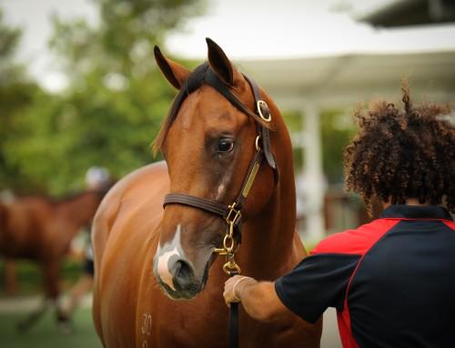 $360,000 Hinchinbrook Colt Headed to Hong Kong