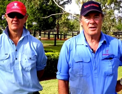 Merry Christmas from all at Yarraman