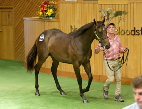 $625,000 I Am Invincible Colt at Karaka