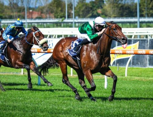 Exciting Filly for I Am Invincible