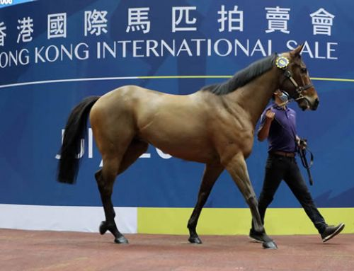 I Am Invincible Gelding Tops HK International Sale