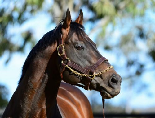Another Record Breaking Season for I Am Invincible