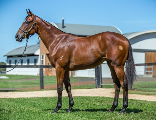 Lot 123 – I Am Invincible x Palace Talk – Filly