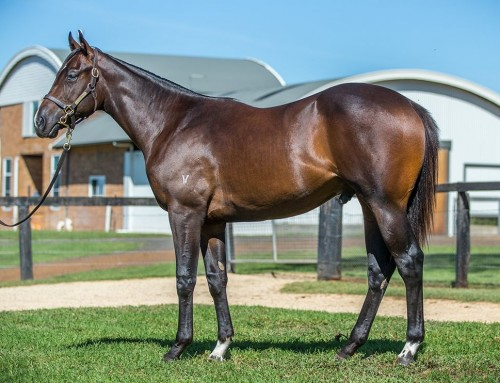 Lot 148 – I Am Invincible x Purrpurrlena – Colt