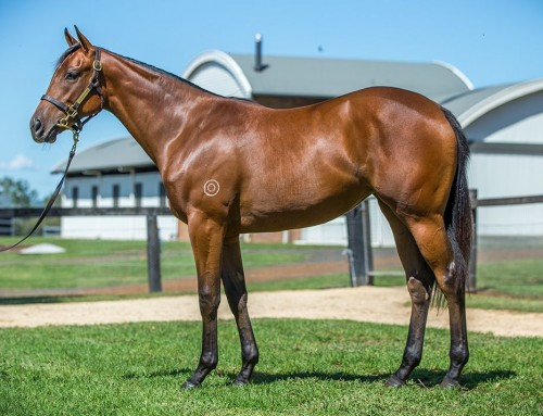 Lot 199 – I Am Invinicible x Silently – Filly