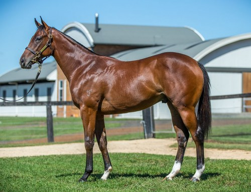 Lot 242 – I Am Invincible x Thinking of You – Colt