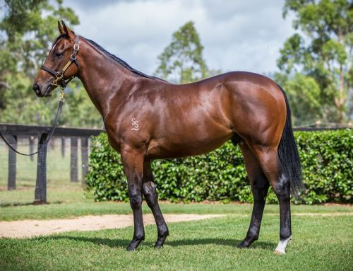 Lot 335 – Hellbent x Sister Madly – Colt