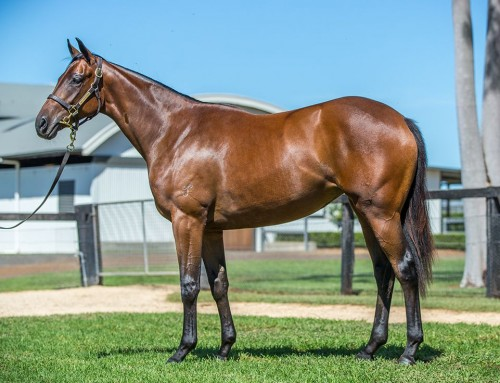 Lot 39 – I Am Invincible x Lorna May – Filly