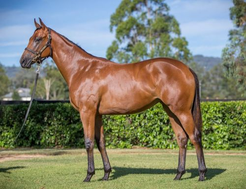 Lot 479 – I Am Invincible x Bareena – Filly