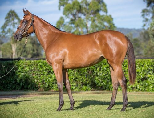 Lot 581 – Territories (IRE) x Duchess Pedrille – Filly