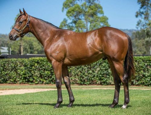 Lot 738 – I Am Invincible x Sanit Minerva – Colt