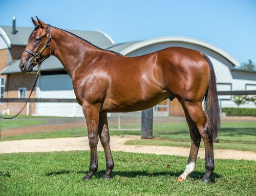 Lot 79 – Hinchinbrook x Miss Vandal – Colt