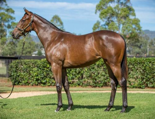 Lot 832 – Exceed and Excel x Status Quo – Filly